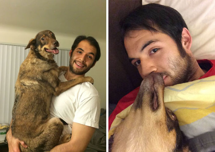 El perro quiere a mi novio más que a mi