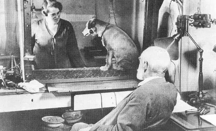 Pavlov's Dog Experiment