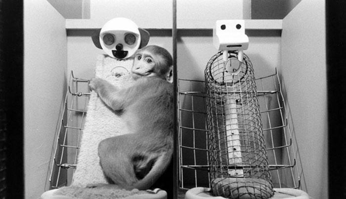 Surrogate Mother Experiment
