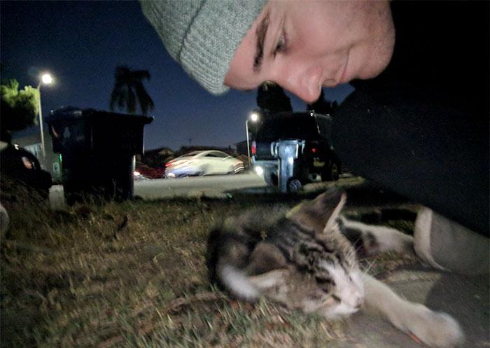 street-cat--follow-human-socks-2