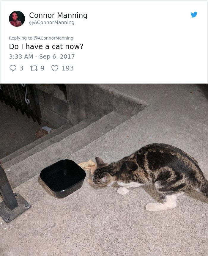 street-cat-socks-follow-human-10