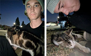 Guy Befriends A Stray Cat, It Follows Him Home And Things Escalate Quickly