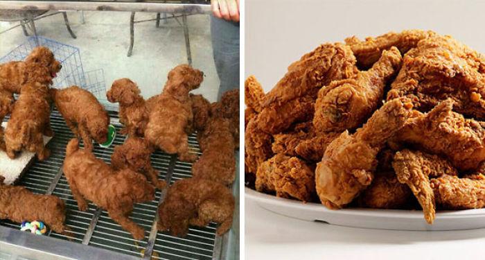 Cachorros que parecen pollo frito