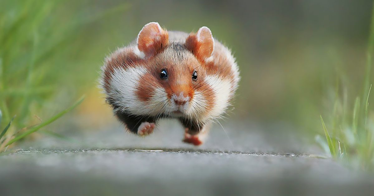 Having A Bad Day? Here's 48 Wild Hamsters | Bored Panda