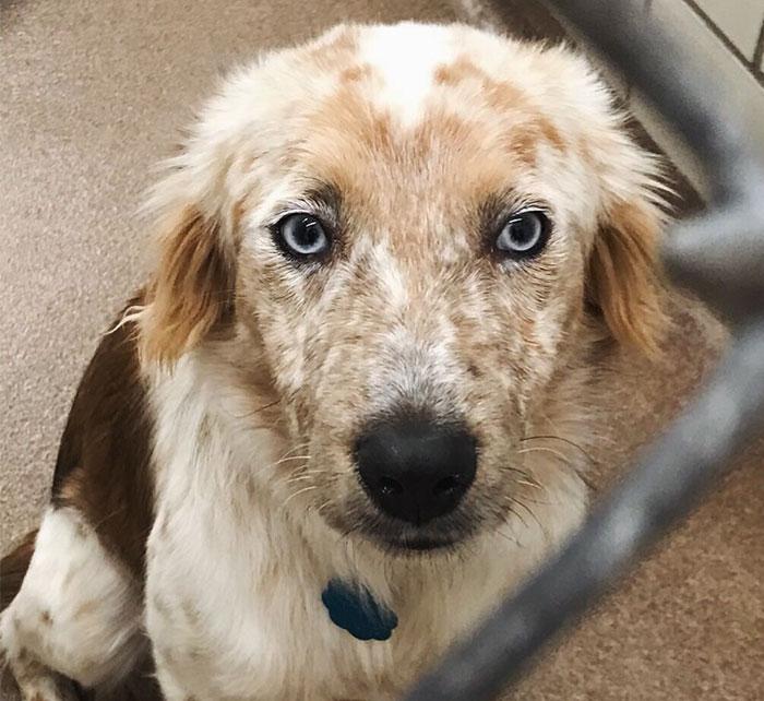 Esta mujer adoptó un perro como regalo por su 25º cumpleaños, y las fotos de antes y después lo dicen todo