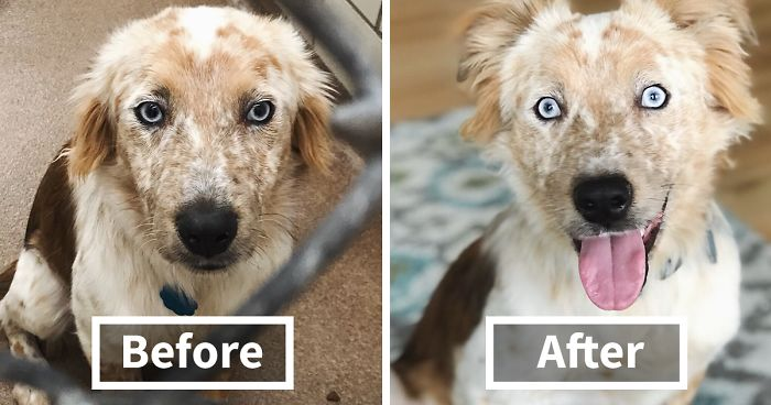 Woman Adopts Dog For Her 25th Birthday, And Its Before-And-After Photos Say It All