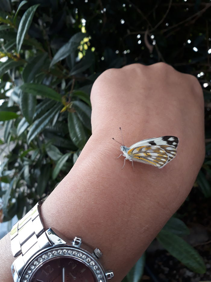 Was Out On A Smoke Break At Work And A Butterfly Sat On My Hand. I Haven't Seen One In Years.
