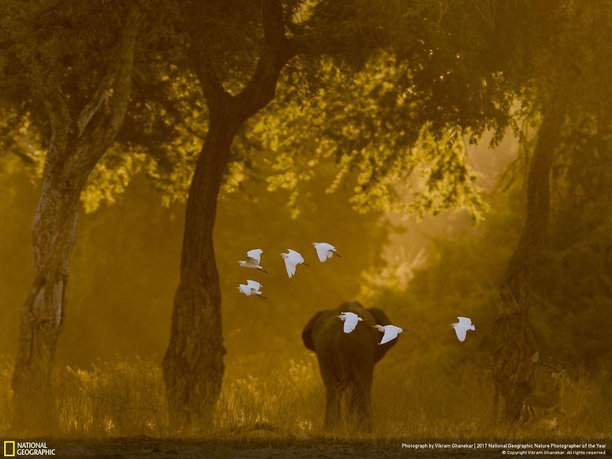 Flight Of Angels, Vikram Ghanekar