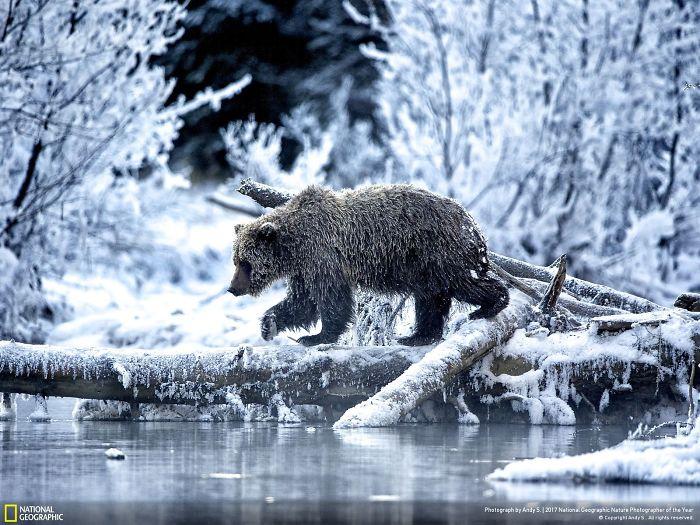 No Ordinary Bear, Andy S.