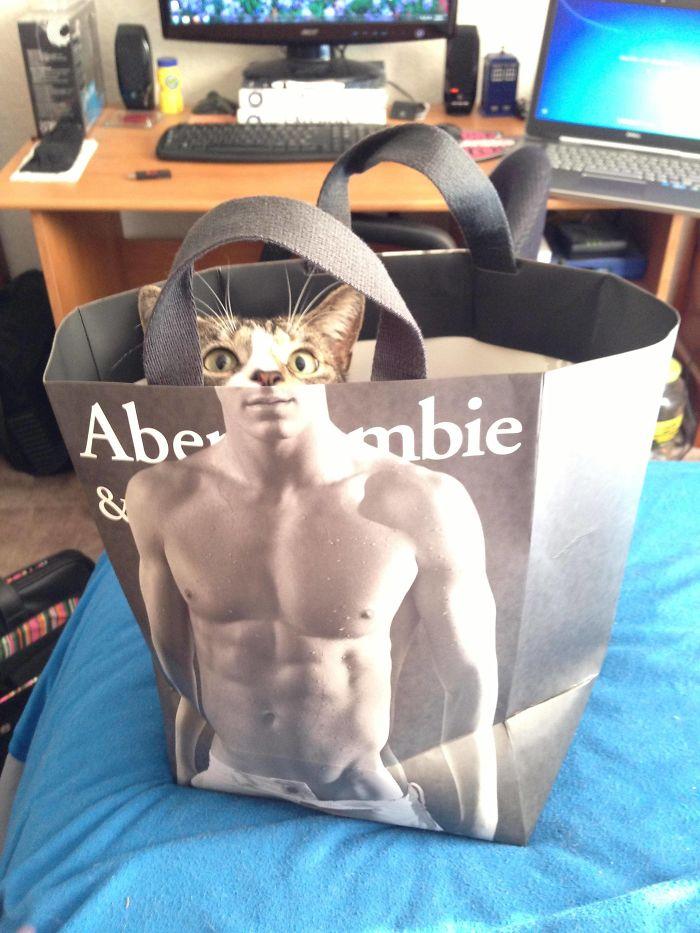 Mi gato tiene abdominales