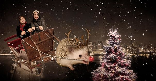 Christmas Card Starring Our Hedgehog