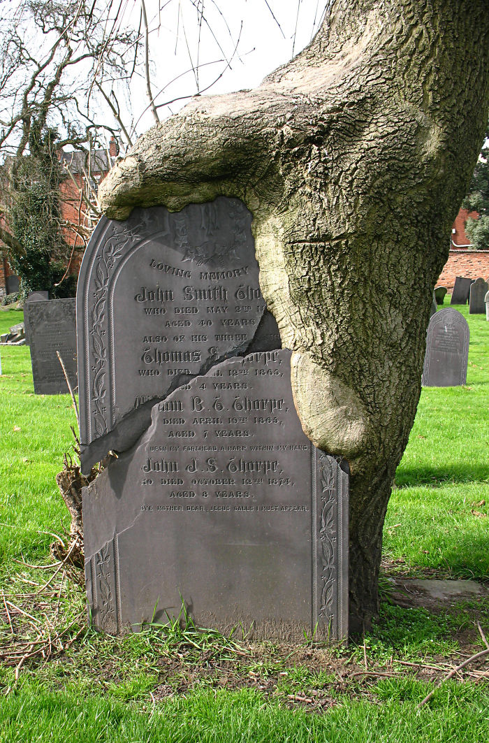 A Gravestone And A Tree Blended Together