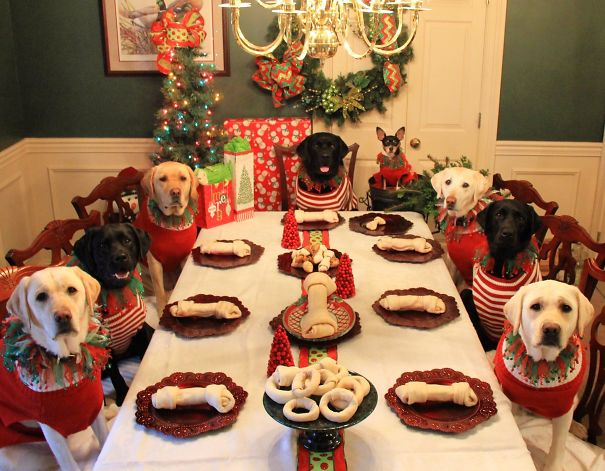 It Looks Like This Family Is Ready For Santa Paws!