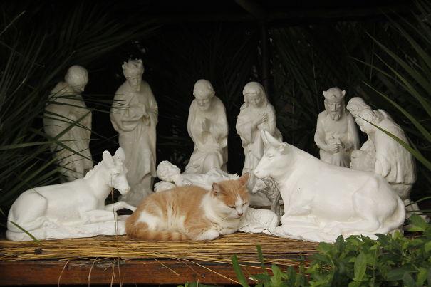 A Cat In The Nativity Scene