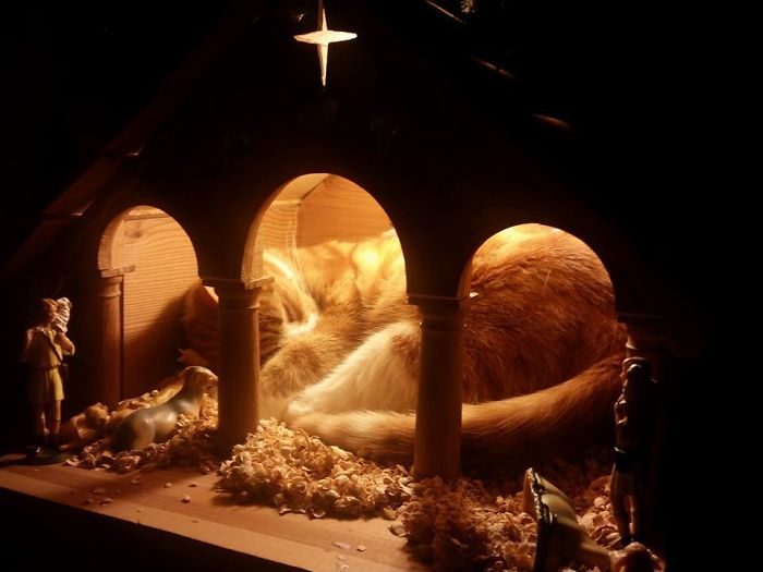 The Jesus In Our Crib Is A Bit Fat, Furry And Pointy Eared... But Undeniably Cute!