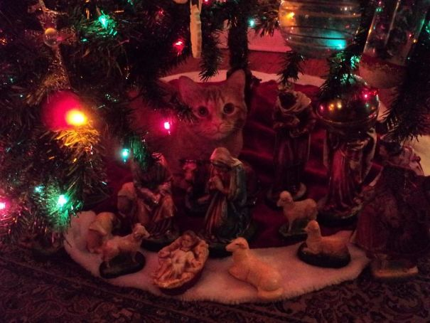 Parent's Cat Decided To Become Part Of The Nativity Scene