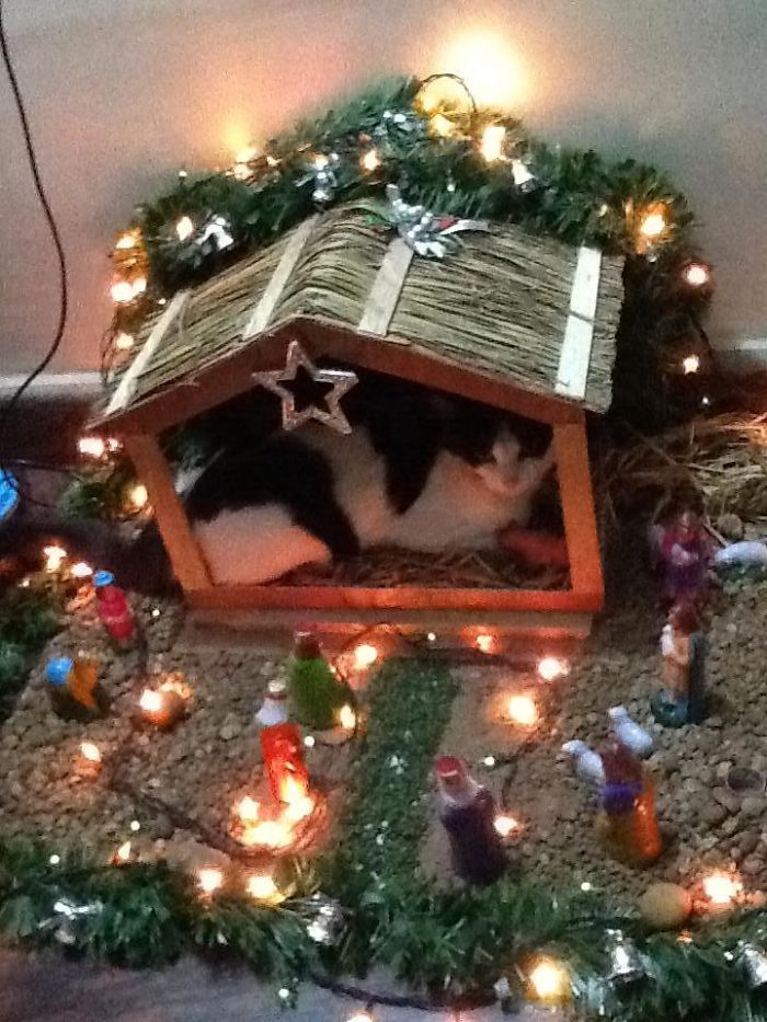 My In-Laws Cat Is Really Getting Into The Christmas Spirit This Year