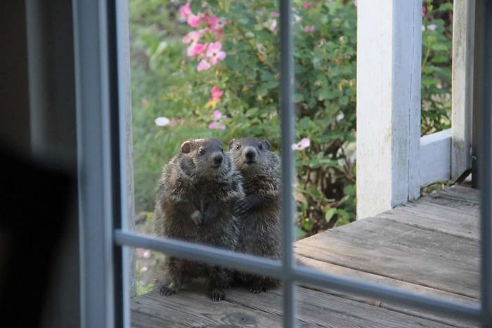 Hoy mi tía ha conocido a sus nuevos vecinos, que se han pasado a saludar