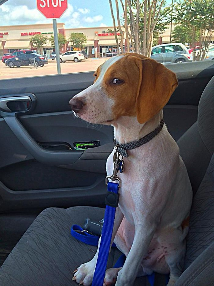 The Exact Moment He Realized He Was Heading To The Vet