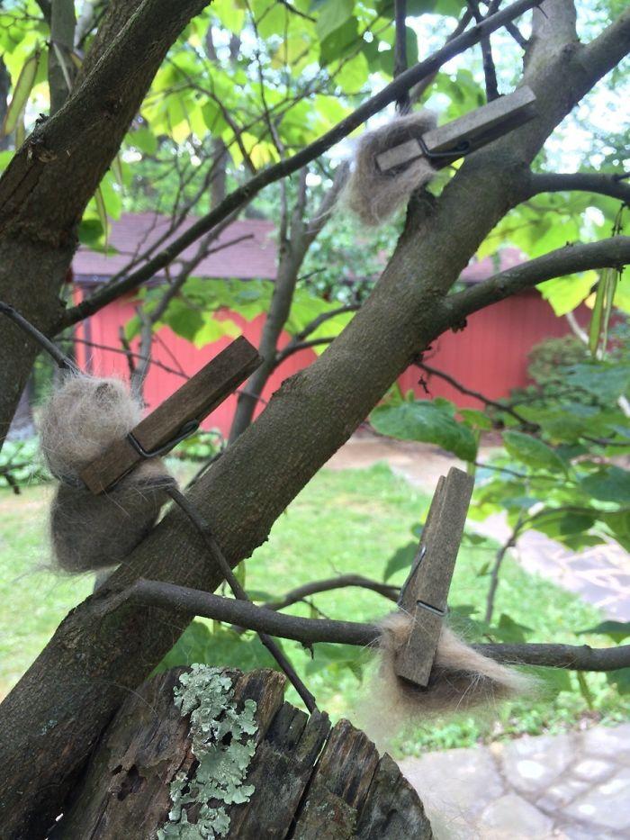 Mi abuela pone el pelo del gato en los árboles para que los pájaros se hagan nidos de lujo