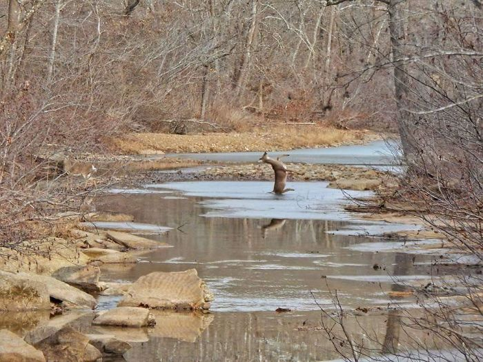 Mi madre pilló a un ciervo resbalándose en el hielo