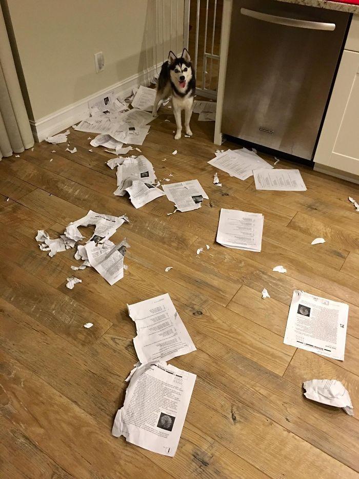 Lo siento, clase. Mi perro se ha comido vuestros deberes. Todos