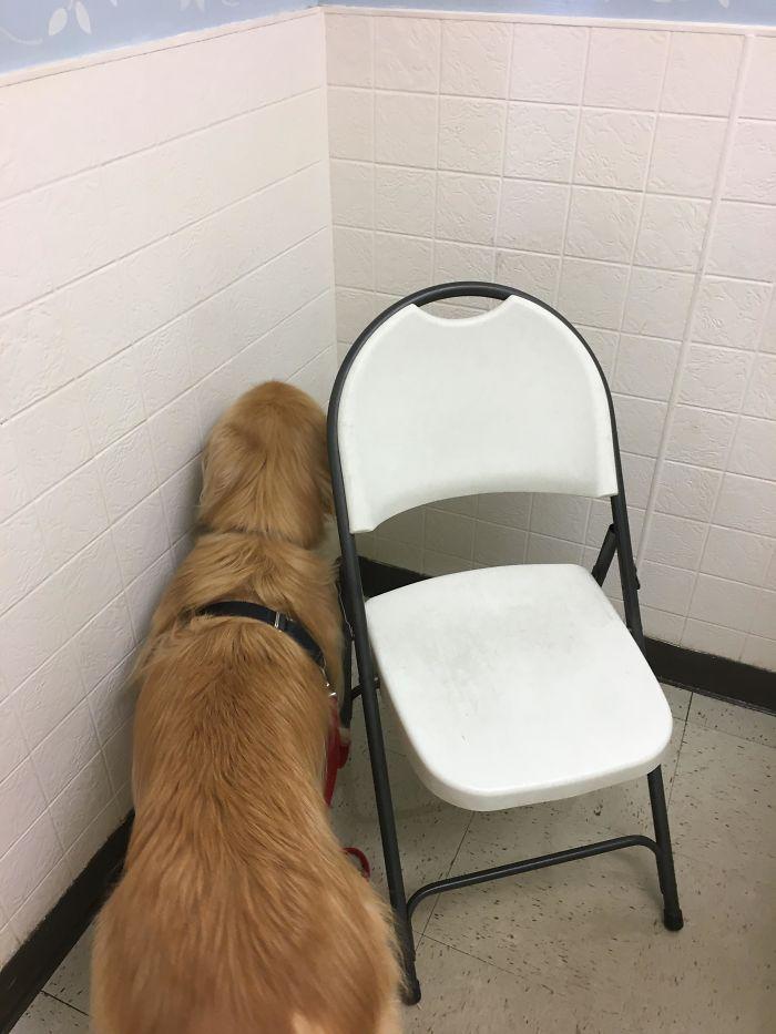 Aquí nunca me encontrará el veterinario