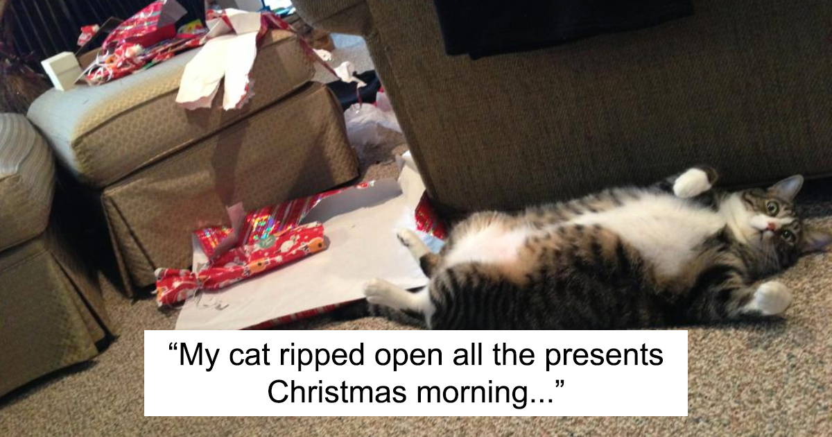99 Dogs And Cats That Destroyed Christmas | Bored Panda