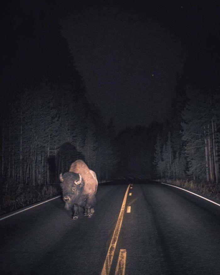 Estaba dando un paseo después de medianoche, y a la luz de la luna vi esto