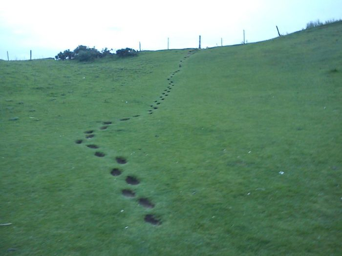 Footsteps Used By Children For Years (Donnelly's Hollow, Ireland)