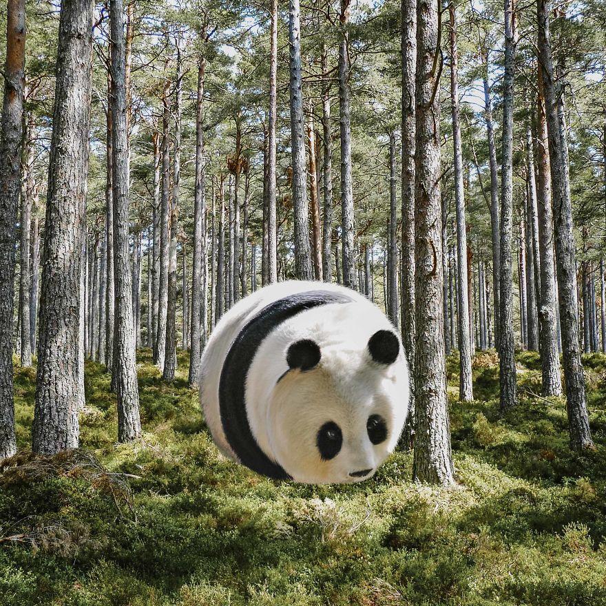 Ball-Shaped-Animals-Digital-Art-Aditya-Aryanto