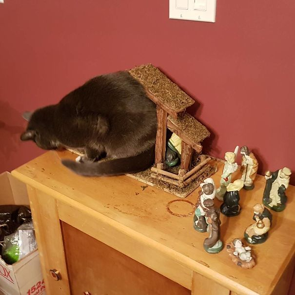 "And The Angel Said Unto Them ""Behold, A Cat Stuffed Itself Into A Manger"""