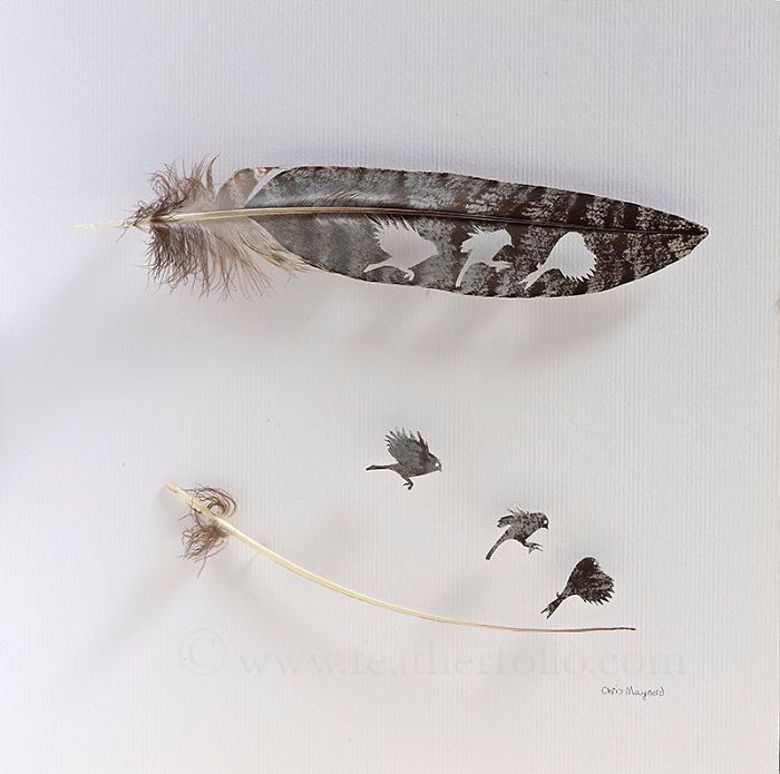 Chris Maynard Carves Feathers Into Intricate Art