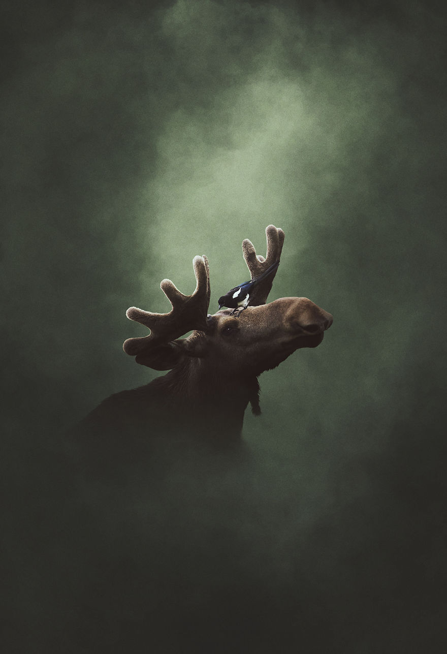 Deep Souls: We Portray Different Personalities Of Animals