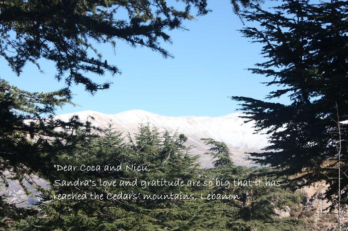 Cedars' Mountains, Lebanon