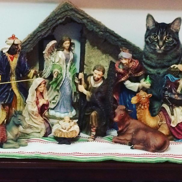Come They Told Him Meow Meow Meow. Zara Has Come To Pay Her Respects To The New Born King