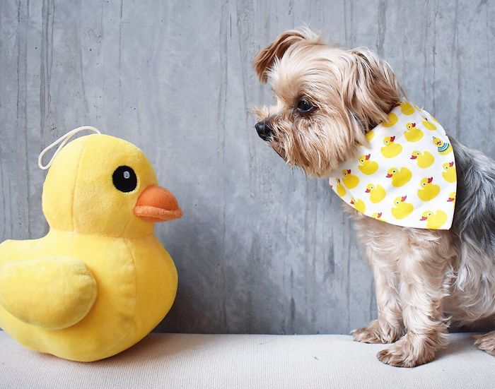 When I, The Staring Contest Champion, Was Dethroned... By A Duck!