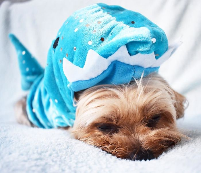 Did You Know Sharks Need To Sleep In On Mondays?
