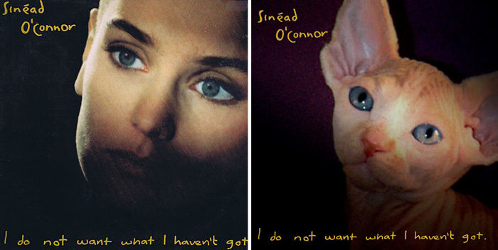 Funny-Kitten-Album-Covers