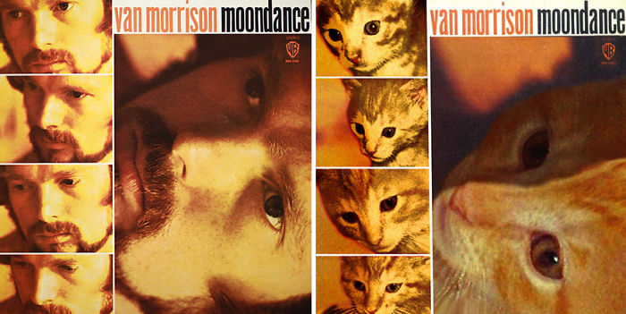Funny-Kitten-Album-Covers