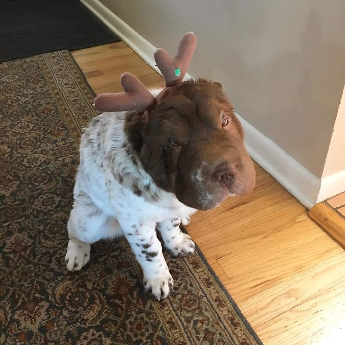 When You Hoped For Some Bones But Received Antlers