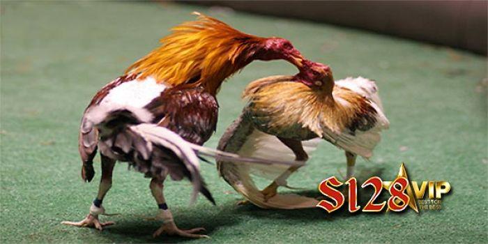 S128vip Link Alternatif S128 Sabung Ayam Online