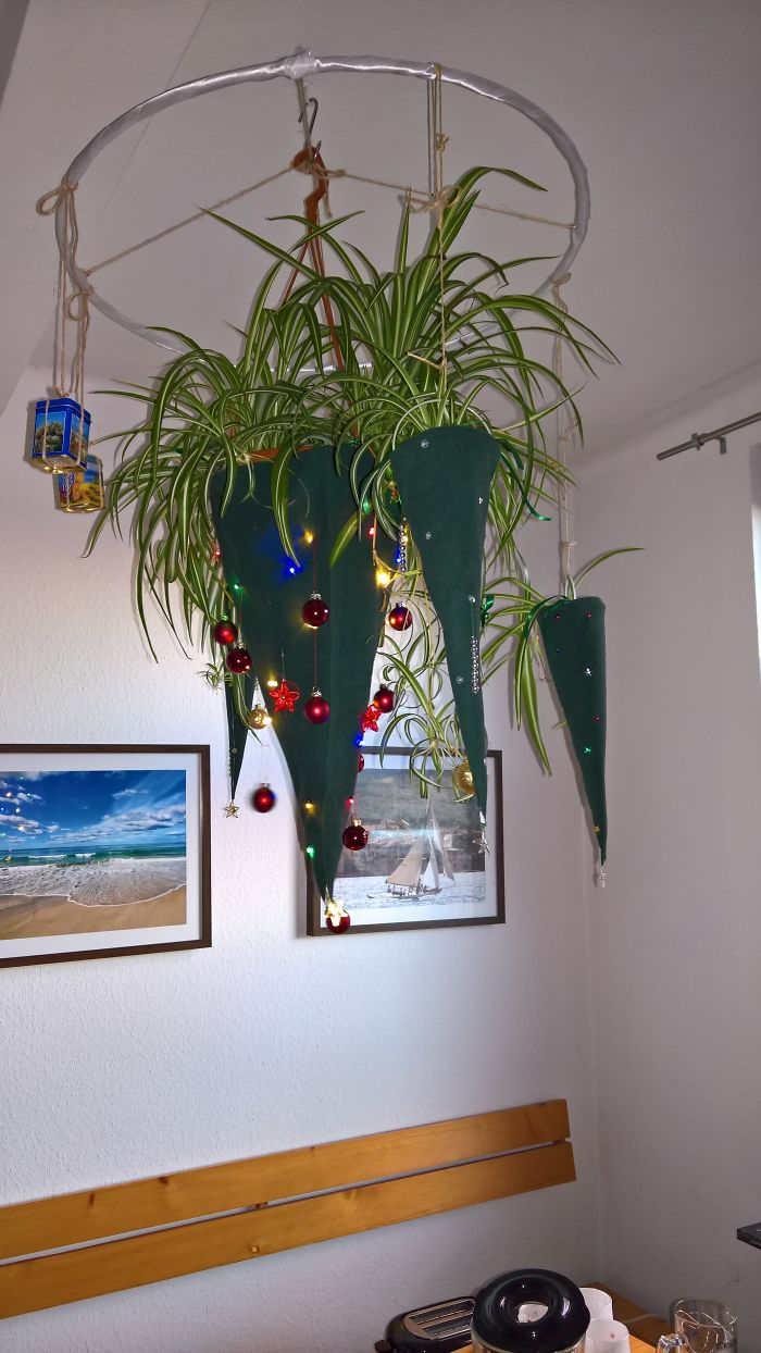 "Our ""Hanging Tree"" Above The Dining Table: Hen And Chickens Plants Got Covered With Green Holey Hats, Perfectly Balaned With 2 Counterweights"