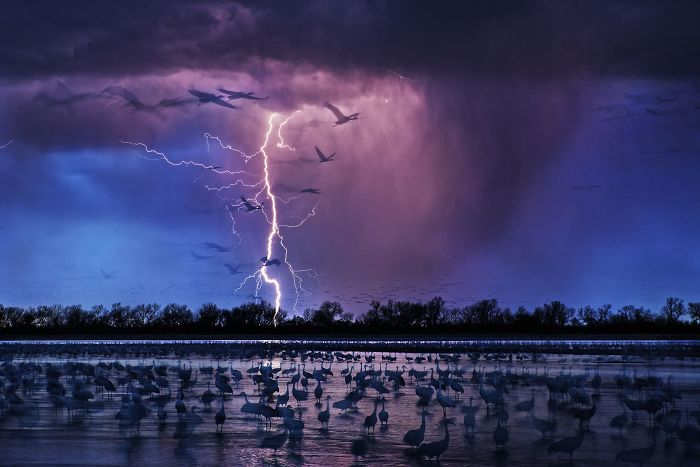 Sand Hill Cranes By Randy Olson (Siena International Photo Awards Photo Of The Year)
