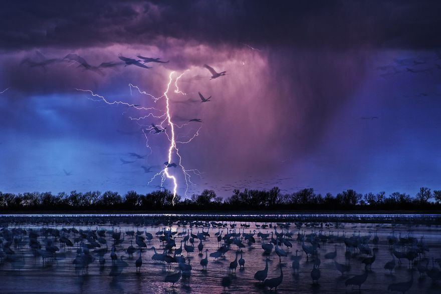 Sand Hill Cranes por Randy Olson (Foto del año de Siena International Photo Awards)