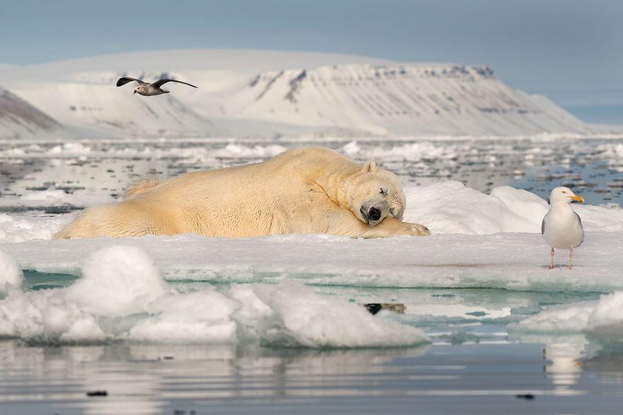 Dreaming On Sea Ice Por Roie Galitz (1º en categoría de hielo frágil)