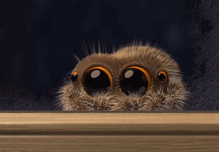 Lucas The Adorable Spider That Cured Everyones Arachnophobia Is