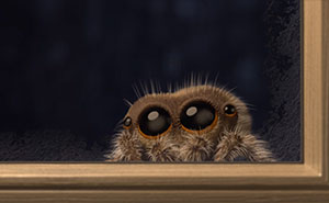 Lucas The Adorable Spider That Cured Everyone's Arachnophobia Is Back And Wants To Come Inside