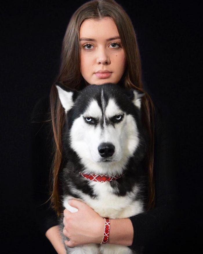 angry-husky-christmas-photoshoot-anuko-11