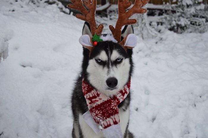 Humans Attempt To Do A Christmas Card Photoshoot With ...